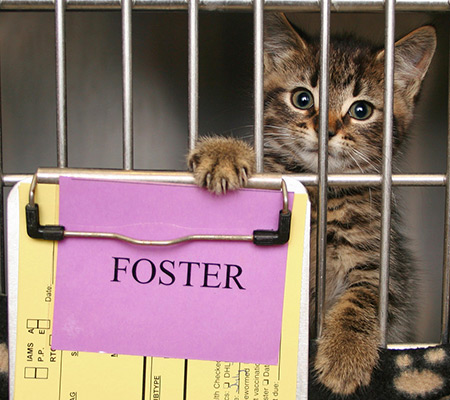 Fostering for a Cat