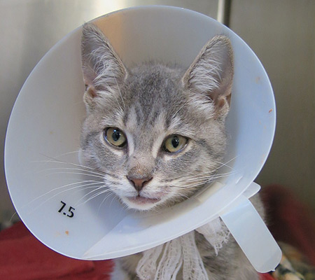 Medical Care for a Cat