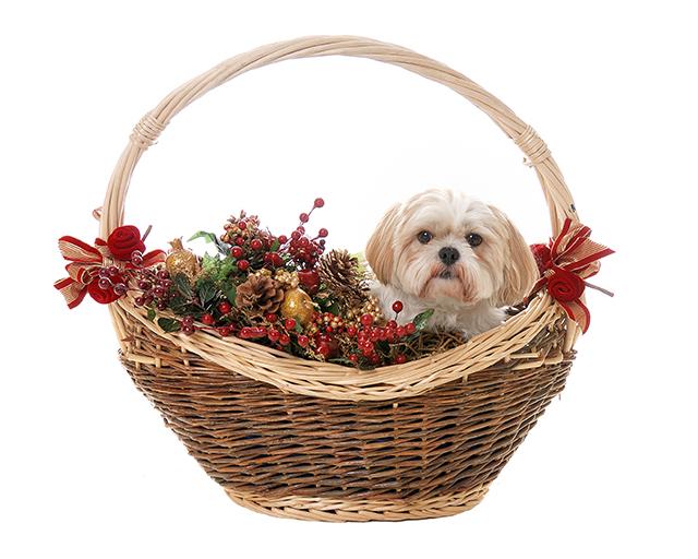 Dog in festive basket