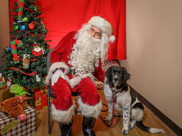 Santa Paws with a dog
